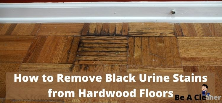 Black Urine Stains From Hardwood Floors, How To Get Urine Out Of Laminate Flooring