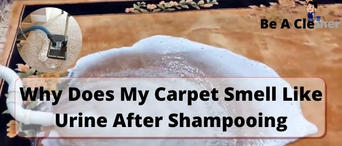 Why Does My Carpet Smell Like Urine After Shampooing