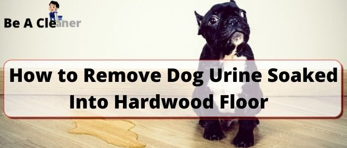 How to Remove Dog Urine Soaked Into Hardwood Floor